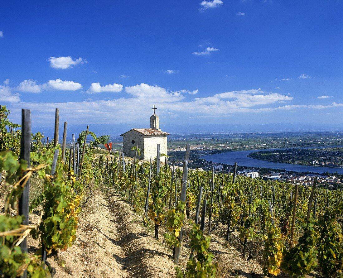 La Chapelle vineyard in Tain-l'Hermitage, Rhone