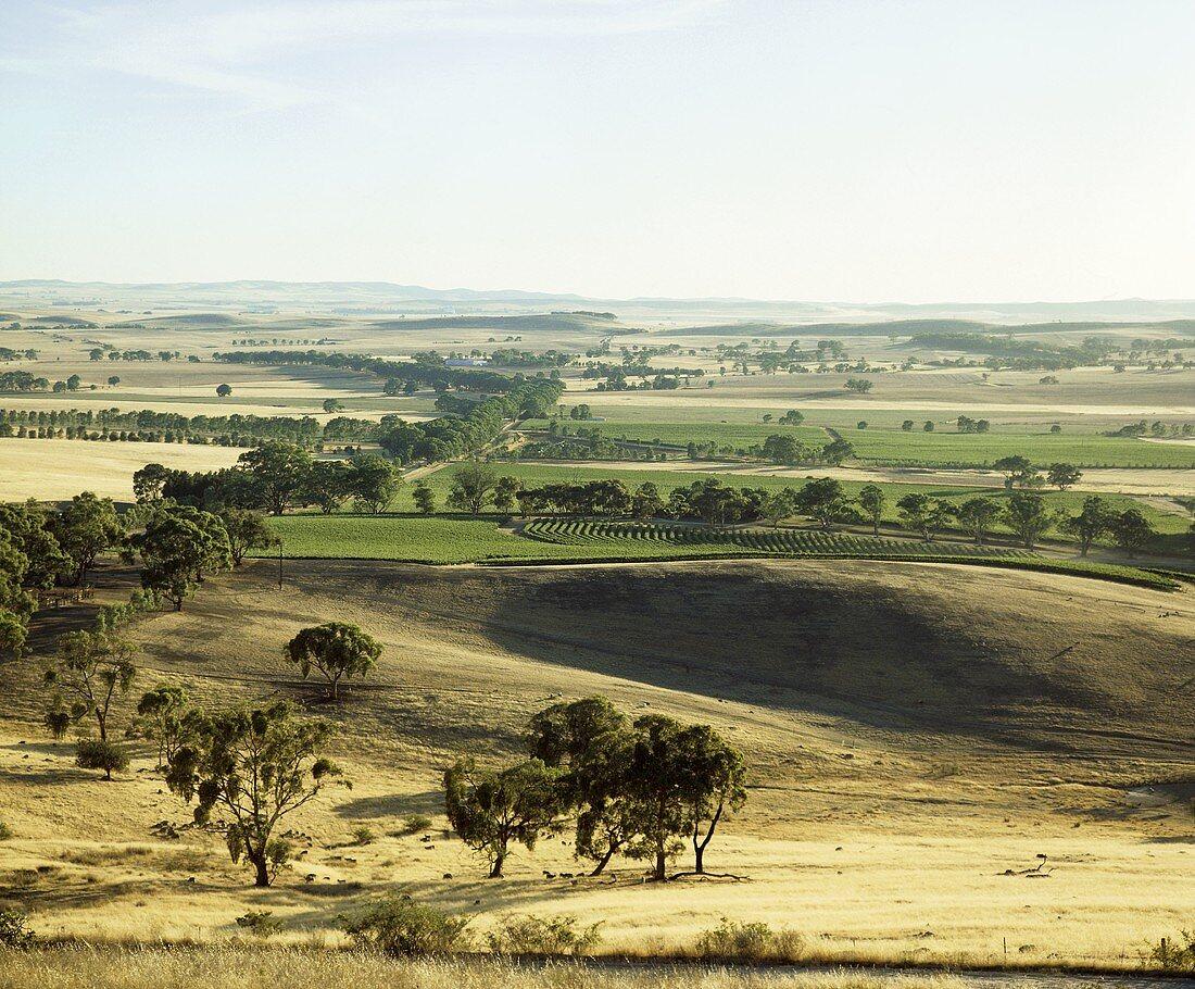 Clare Valley, wine region in South Australia
