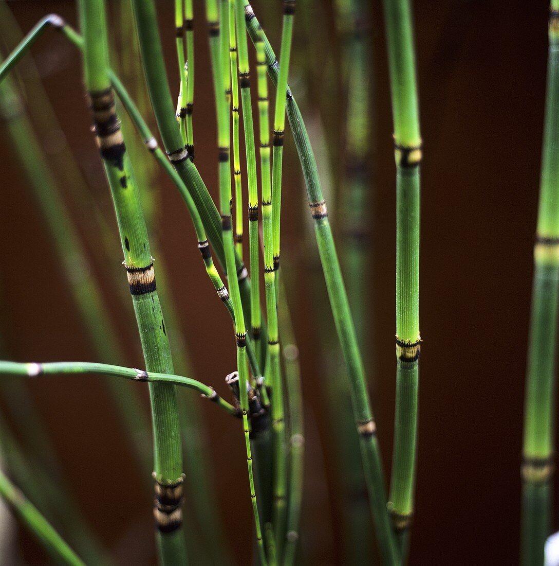 Several bamboo canes