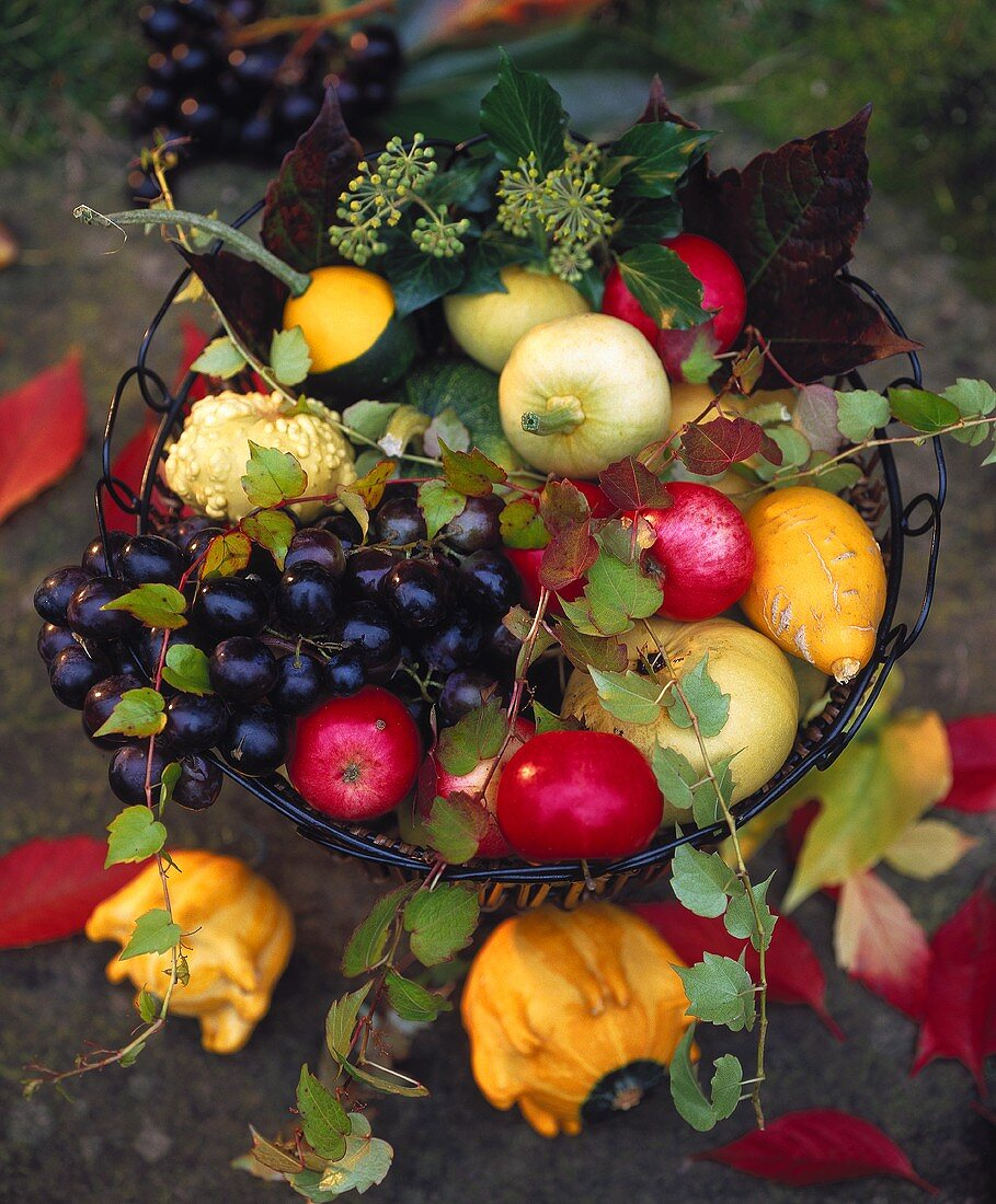 Basket of autumn fruit, vine tendrils and trailing ivy