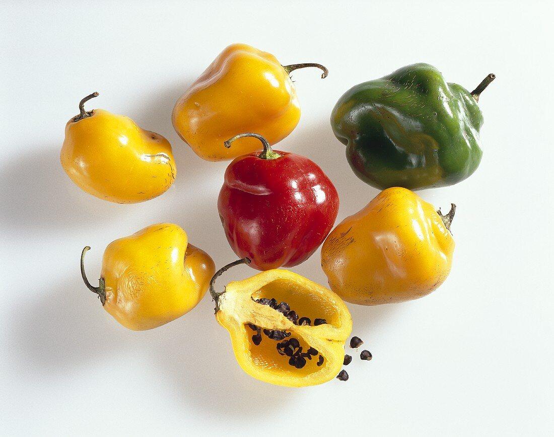 Chilischoten (Chile manzano)