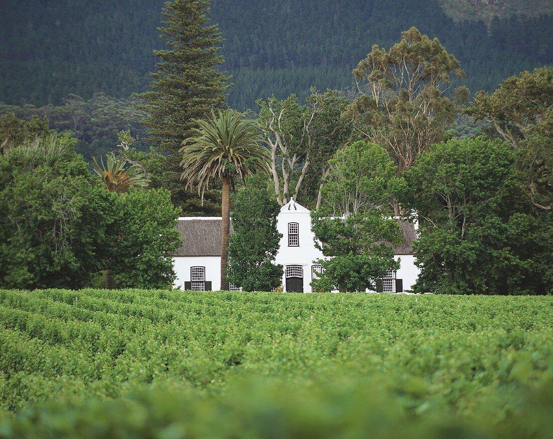 Buitenverwachting Winery (organic wines), Constantia, S. Africa