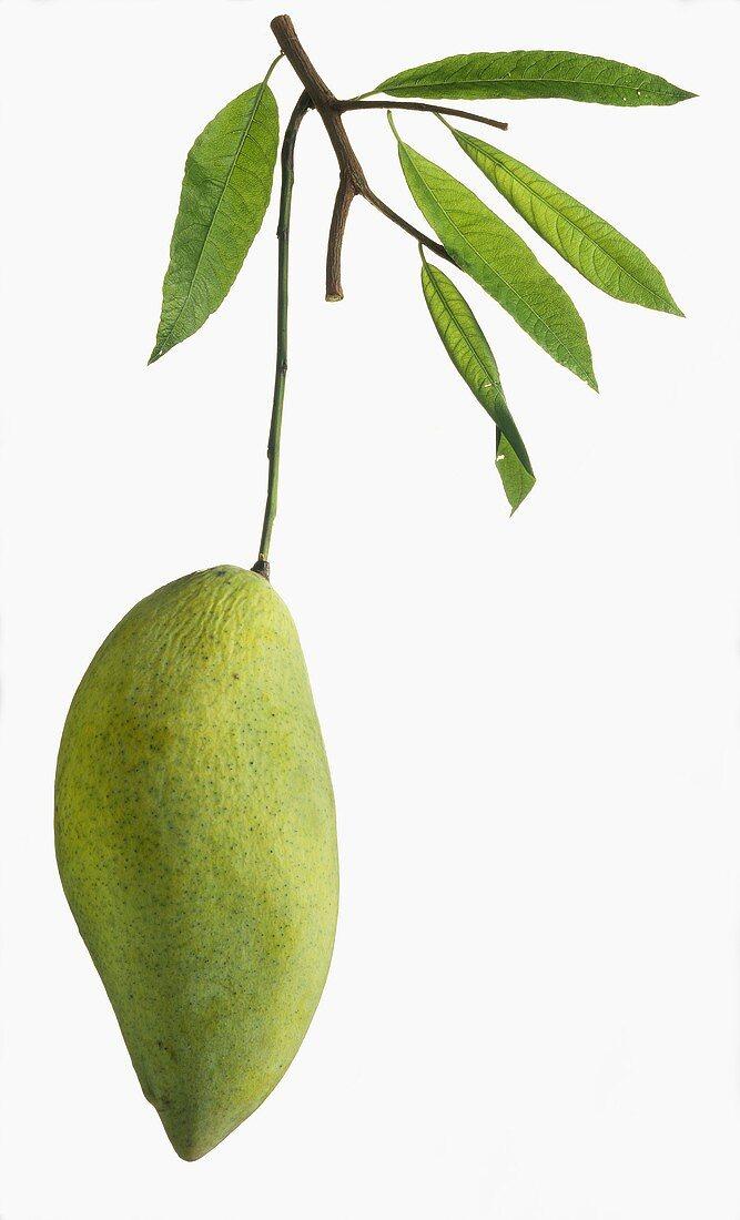 One Green Mango