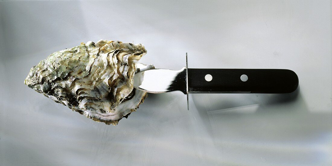 Oyster Being Shucked