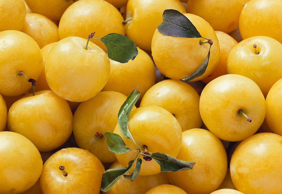 Yellow plums, three with stalk & leaf (filling the picture)