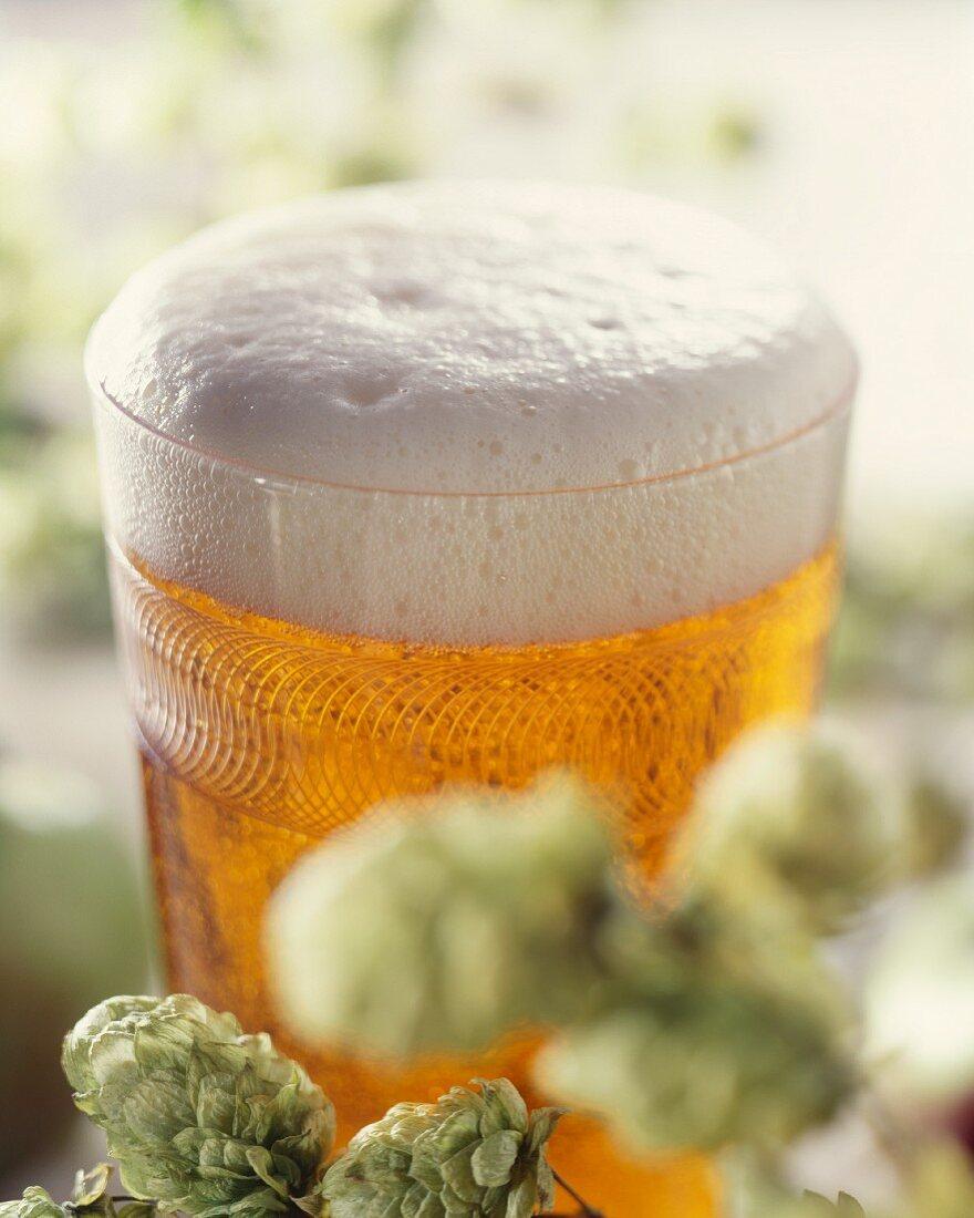A glass of light beer behind hop sprigs