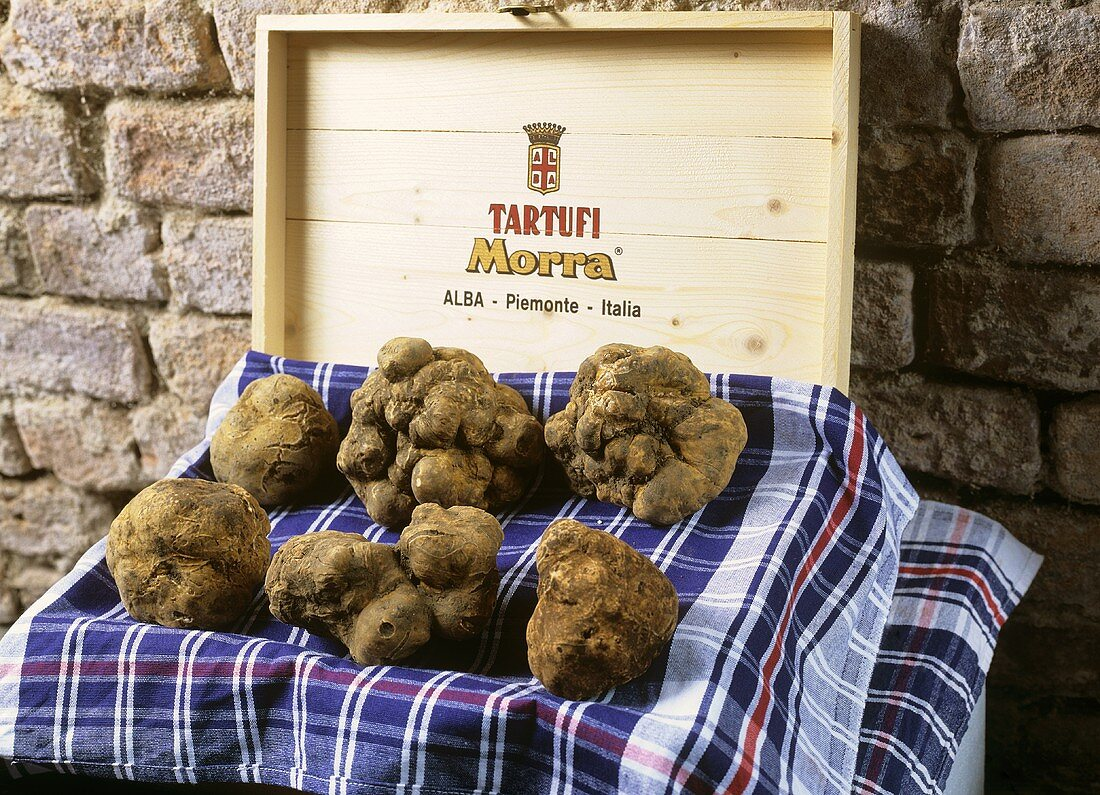 White truffles from Alba, presented on a wooden box