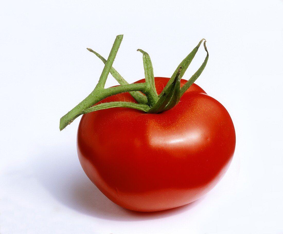 A vine tomato on a white background