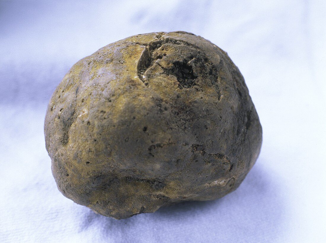 White truffle from Alba on a light background