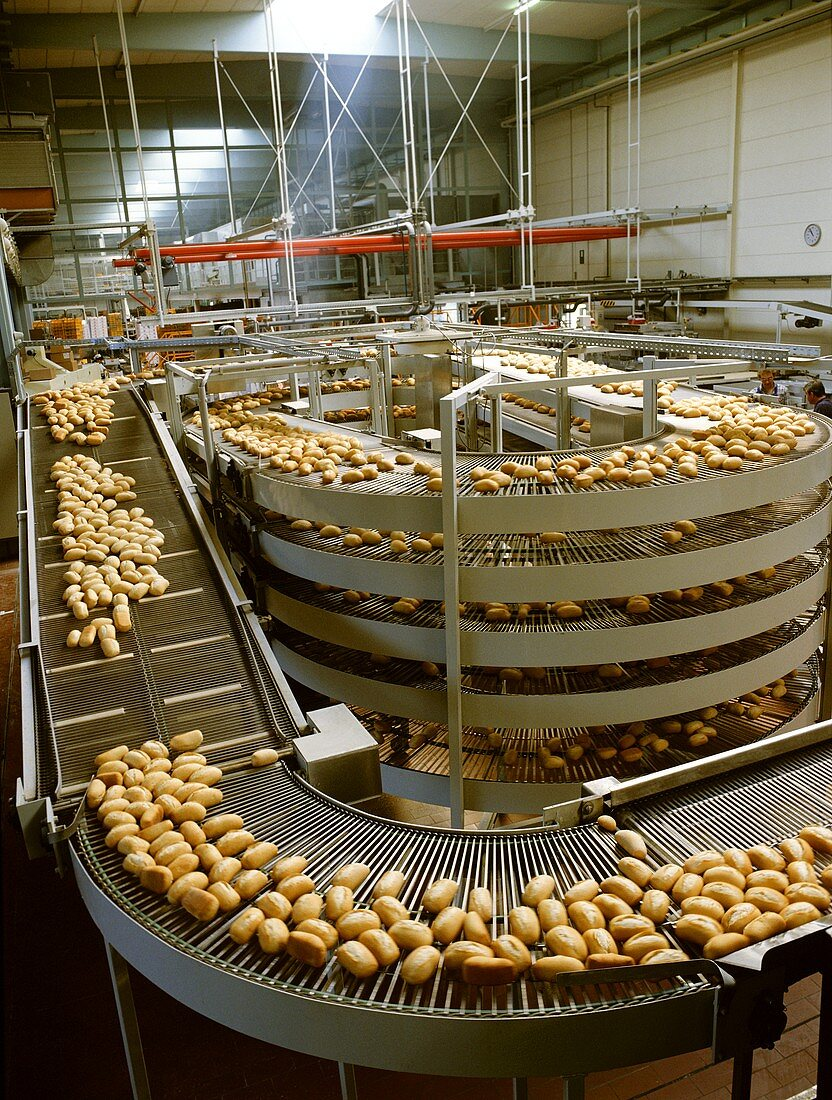 Baguette rolls on cooling line at large-scale bakery