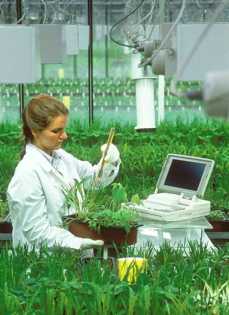 Biology laboratory assistant assessing herbicide tests