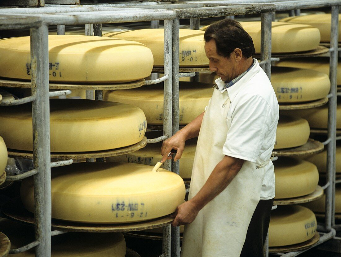Dairy specialist taking cheese sample in the maturing room