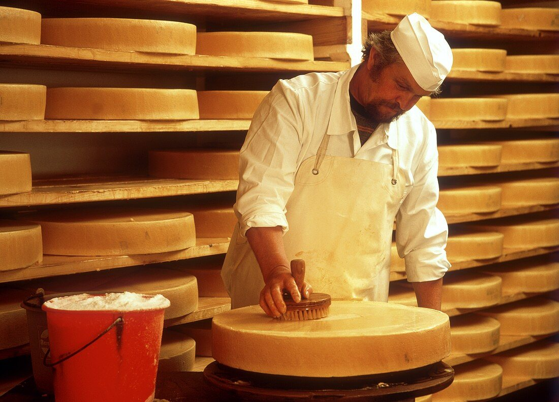 Experience dairyman brushing cheese in the maturing room