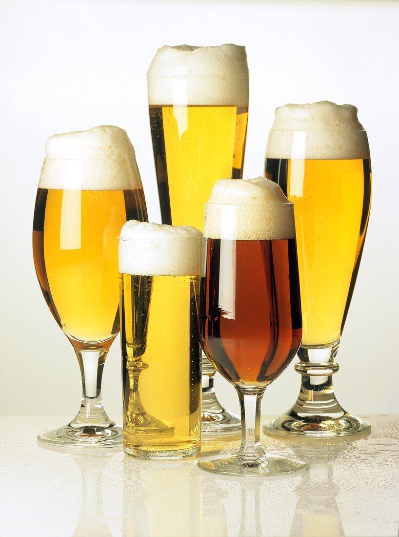 Various Types of Beers