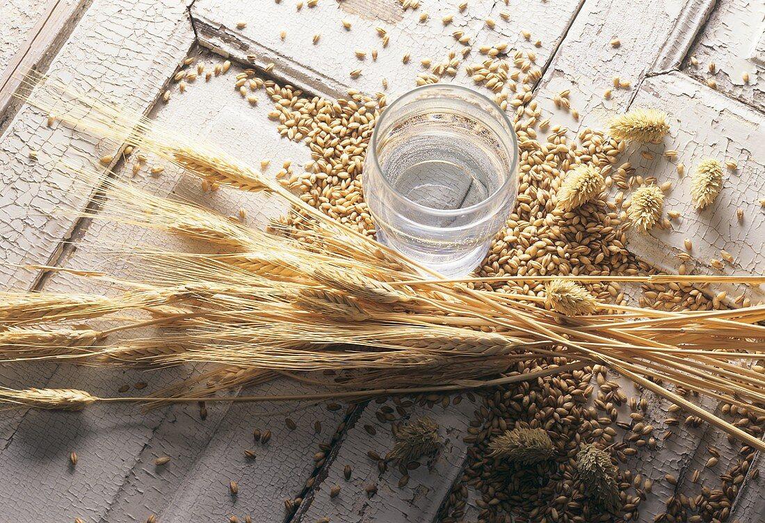 Beer ingredients: water, barley, hops