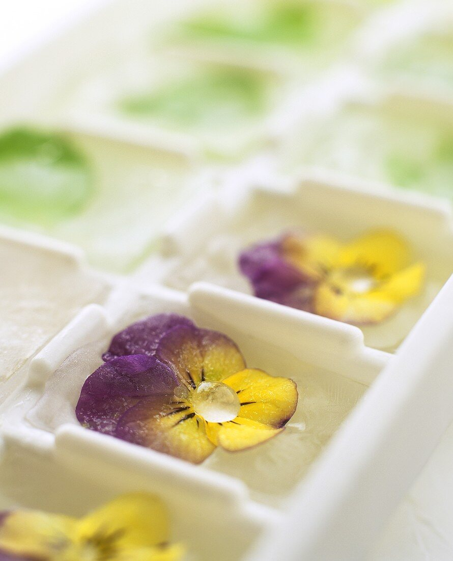 Ice cubes with frozen flowers in ice cube maker