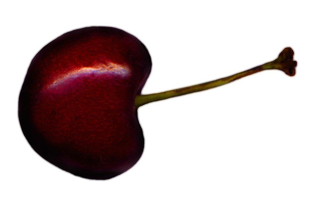 Black cherry with stalk