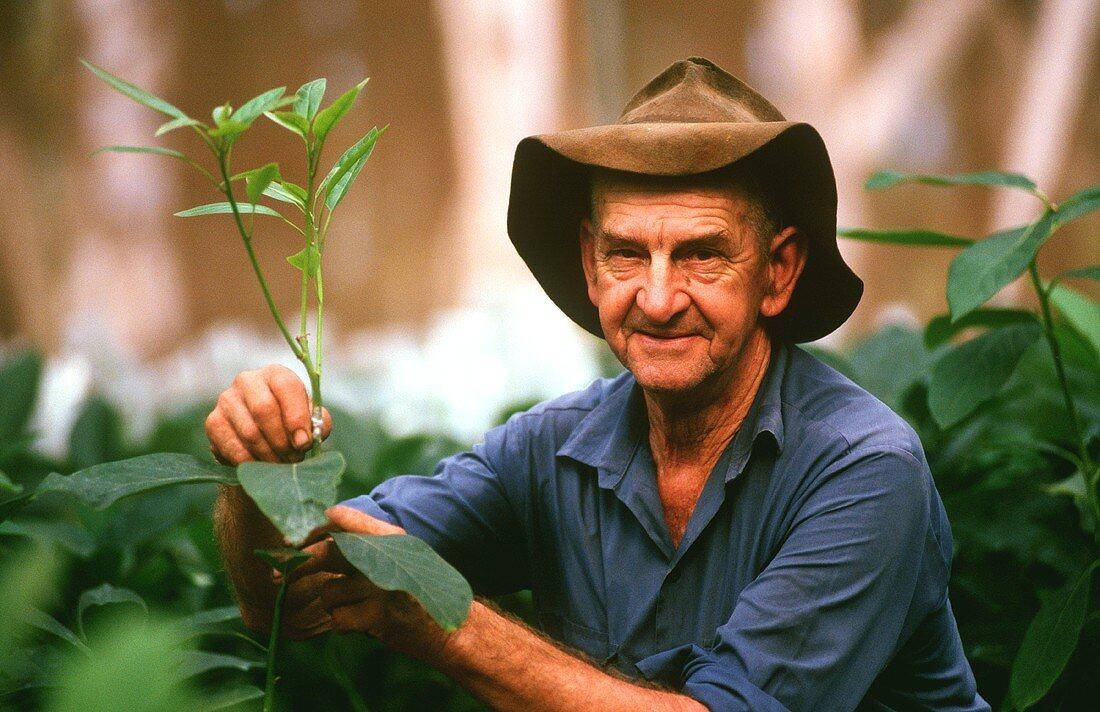 Australian farm worker with avocado plants