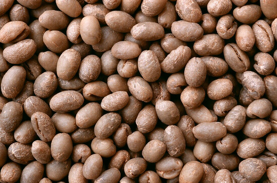 Unroasted coffee beans (filling the picture)
