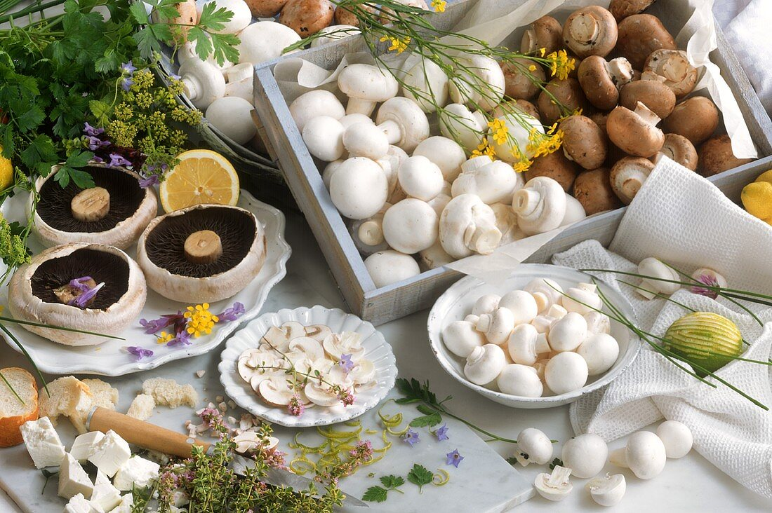 Still life with various types of mushrooms
