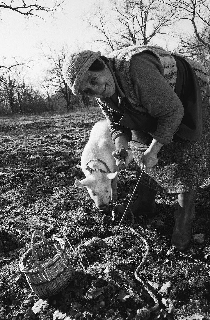 Truffle pig with farmer's wife (France)