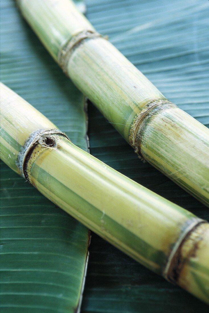 Sugar cane on palm leaves