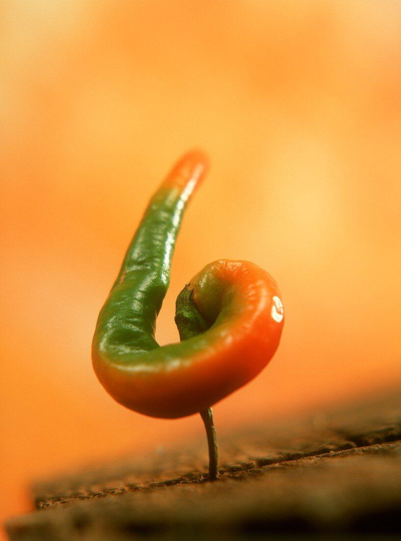 Fresh chili pepper