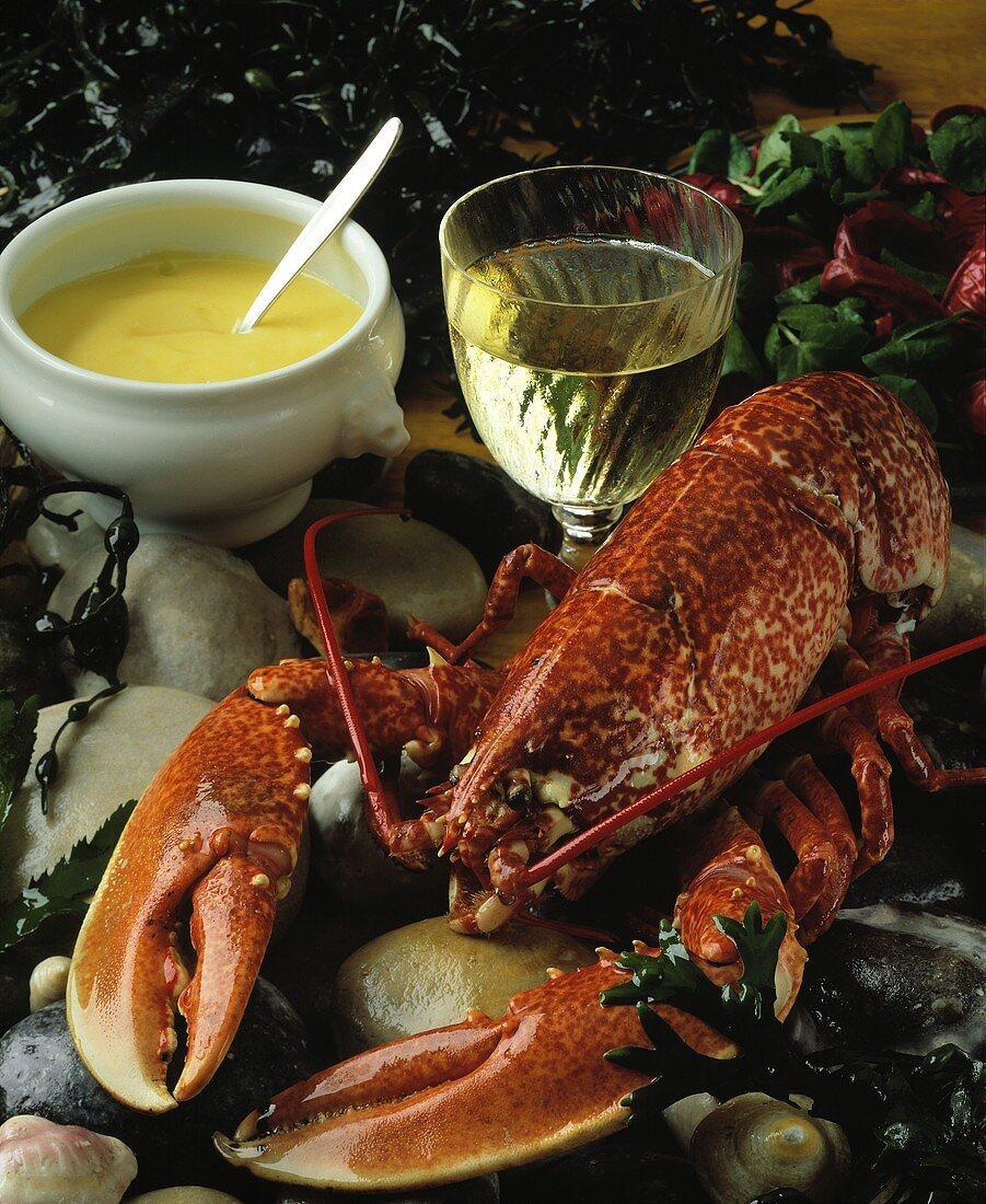 Boiled Breton lobster, sauce Bearnaise, a glass of wine
