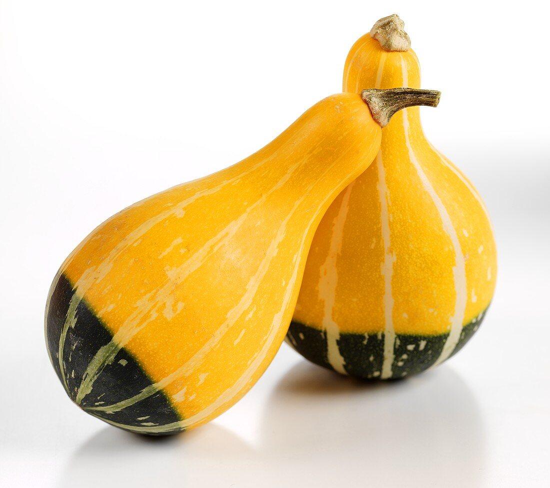 Pear-shaped squashes