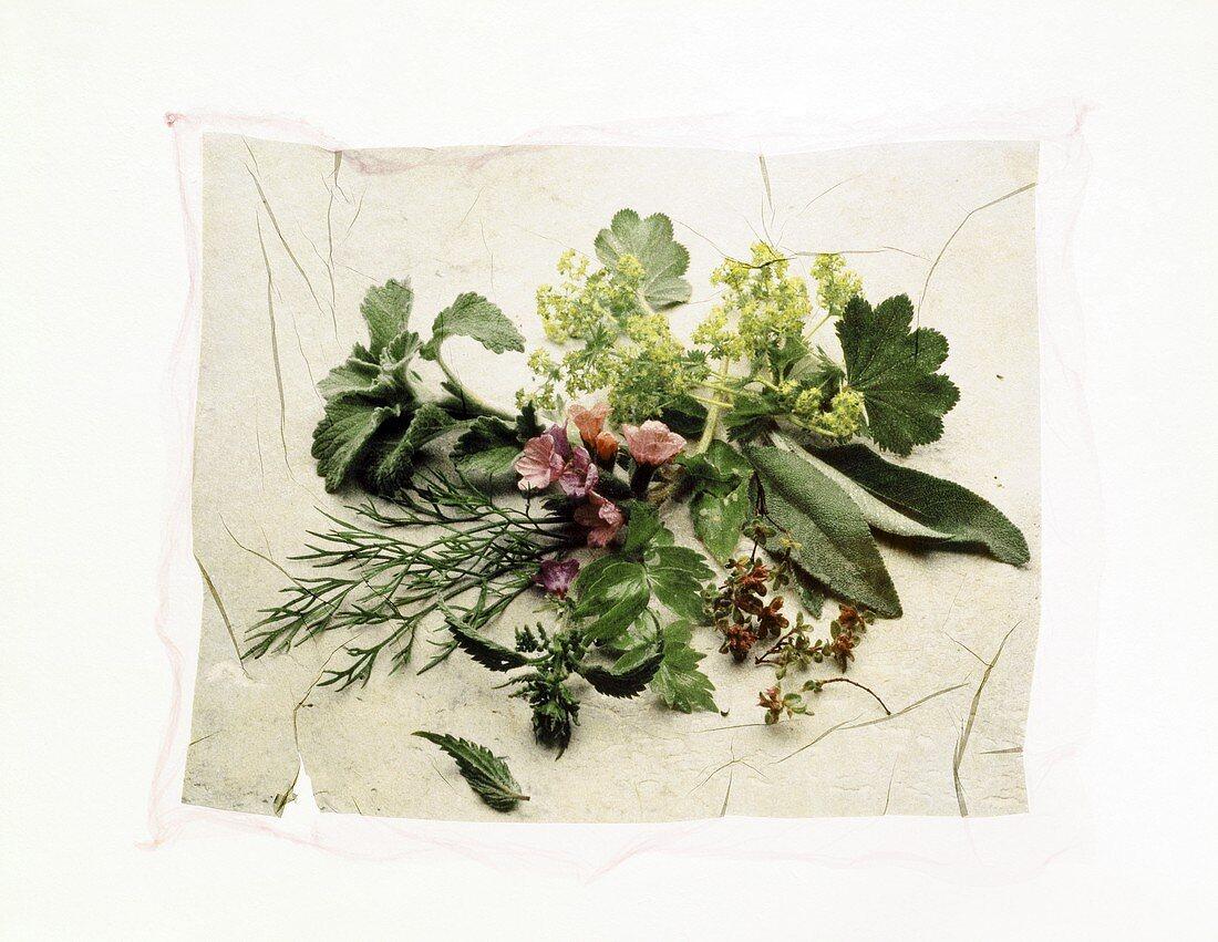 Stillleben mit Kräutern (Effekt durch Polaroid Image Transfer)