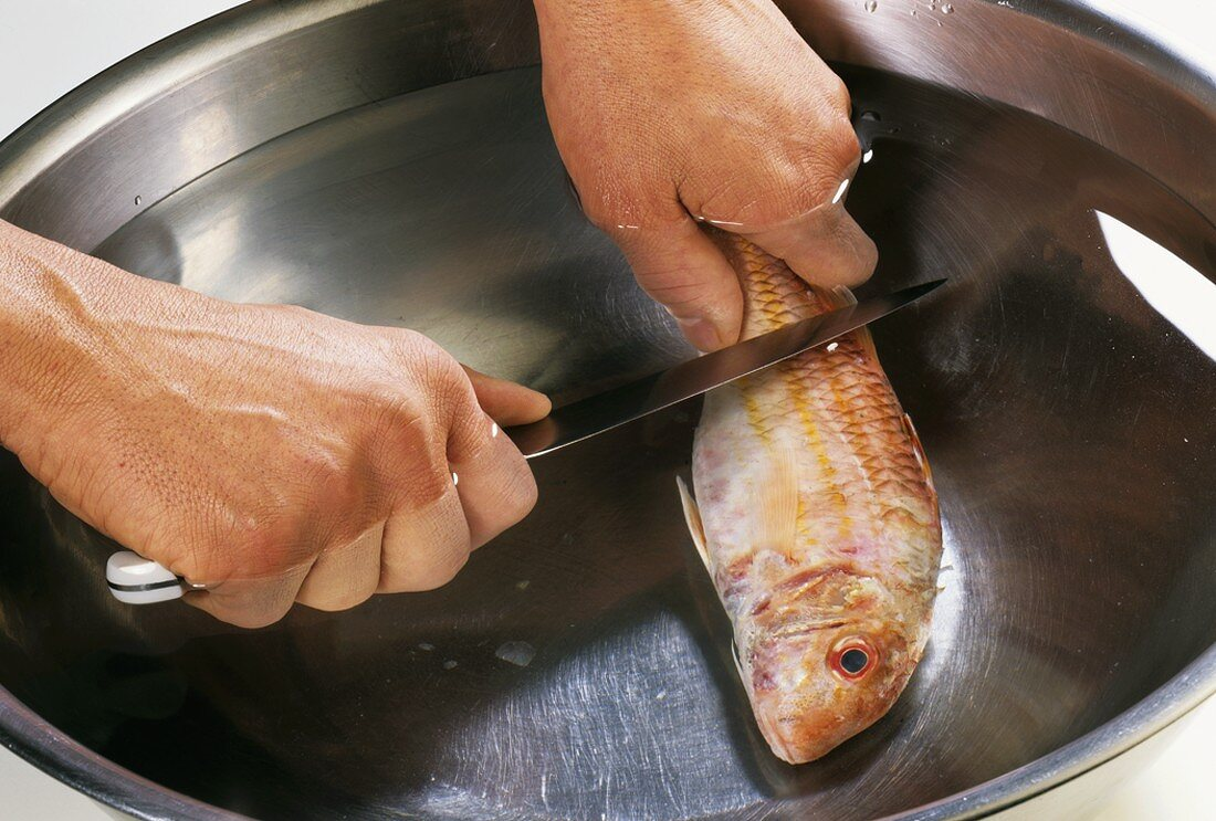 Scaling a red mullet