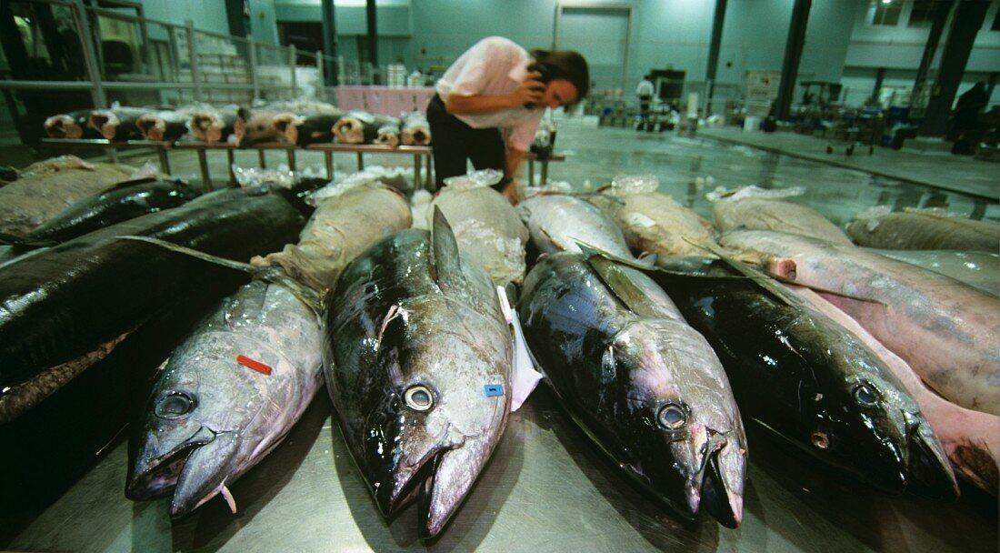 Tuna at the fish market in Sydney
