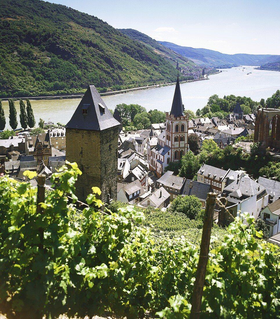 Vineyard in Bacharach, Middle Rhine, Germany
