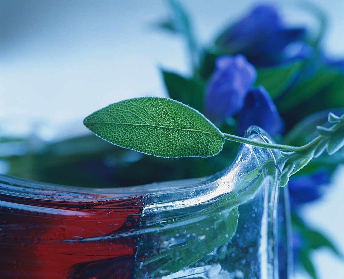 Sprig of sage on the rim of a glass jug