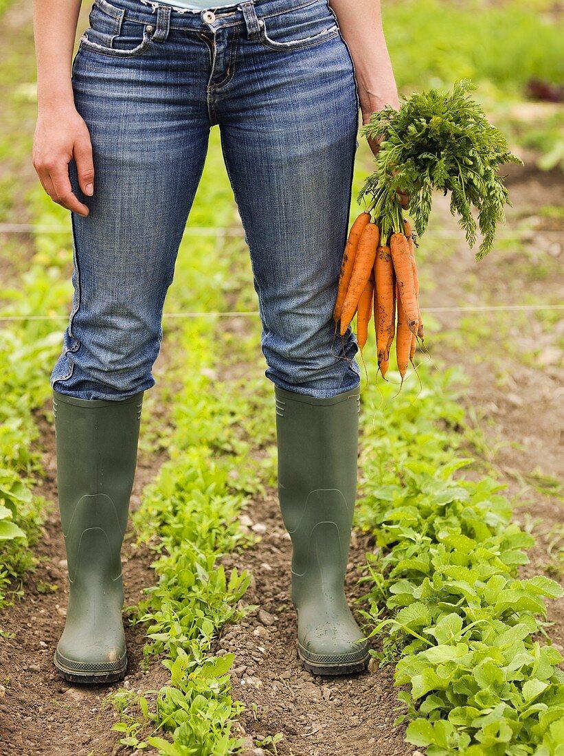 Woman holding freshly picked carrots in vegetable garden
