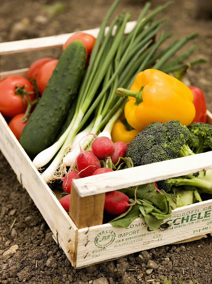 Crate of freshly picked organic vegetables on soil