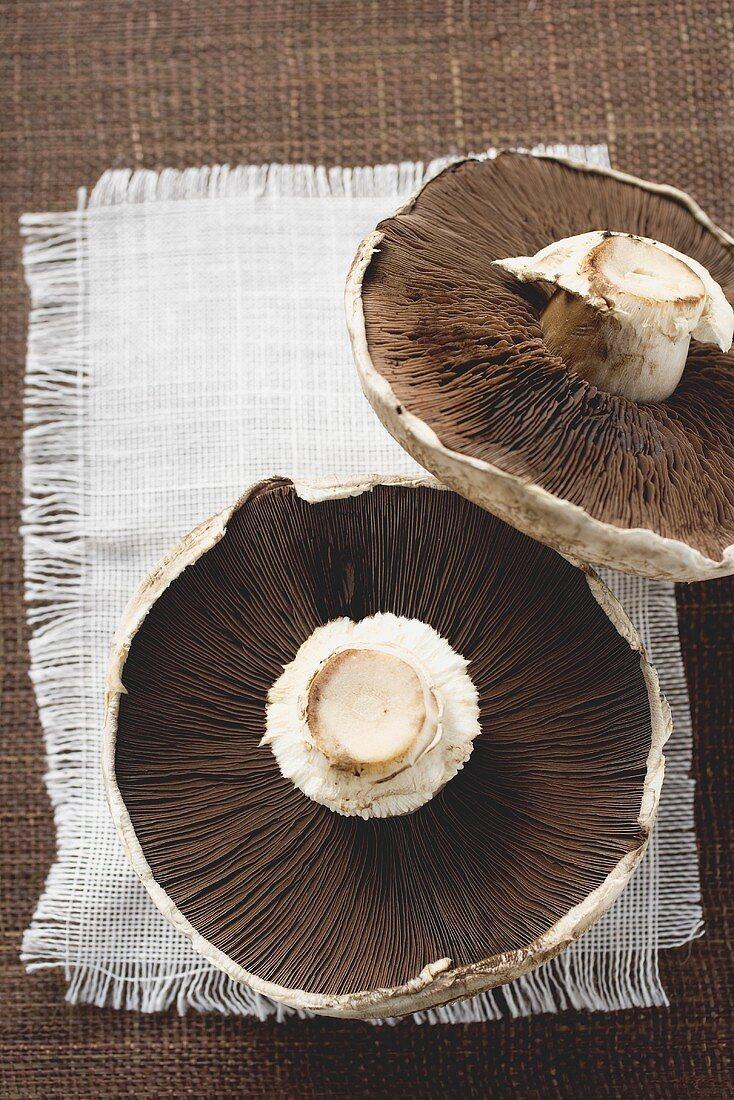 Portobello mushrooms from below