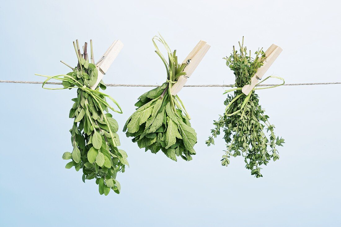 Thyme, oregano and mint drying on a washing line