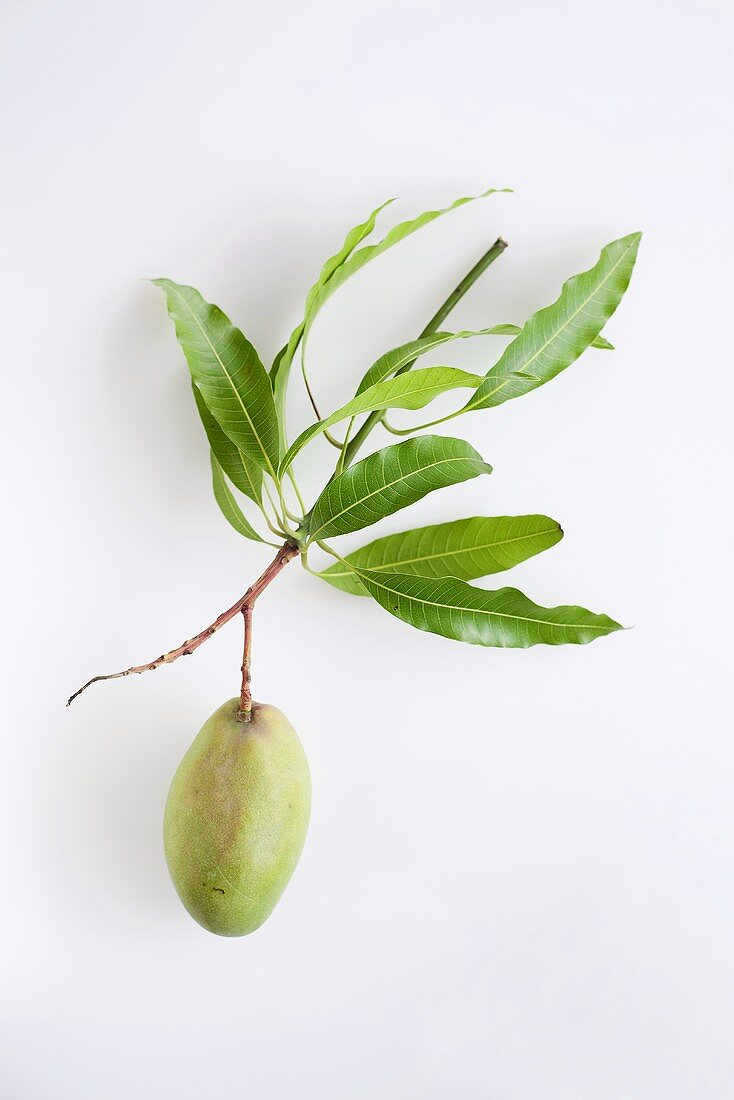 A green mango with leaves