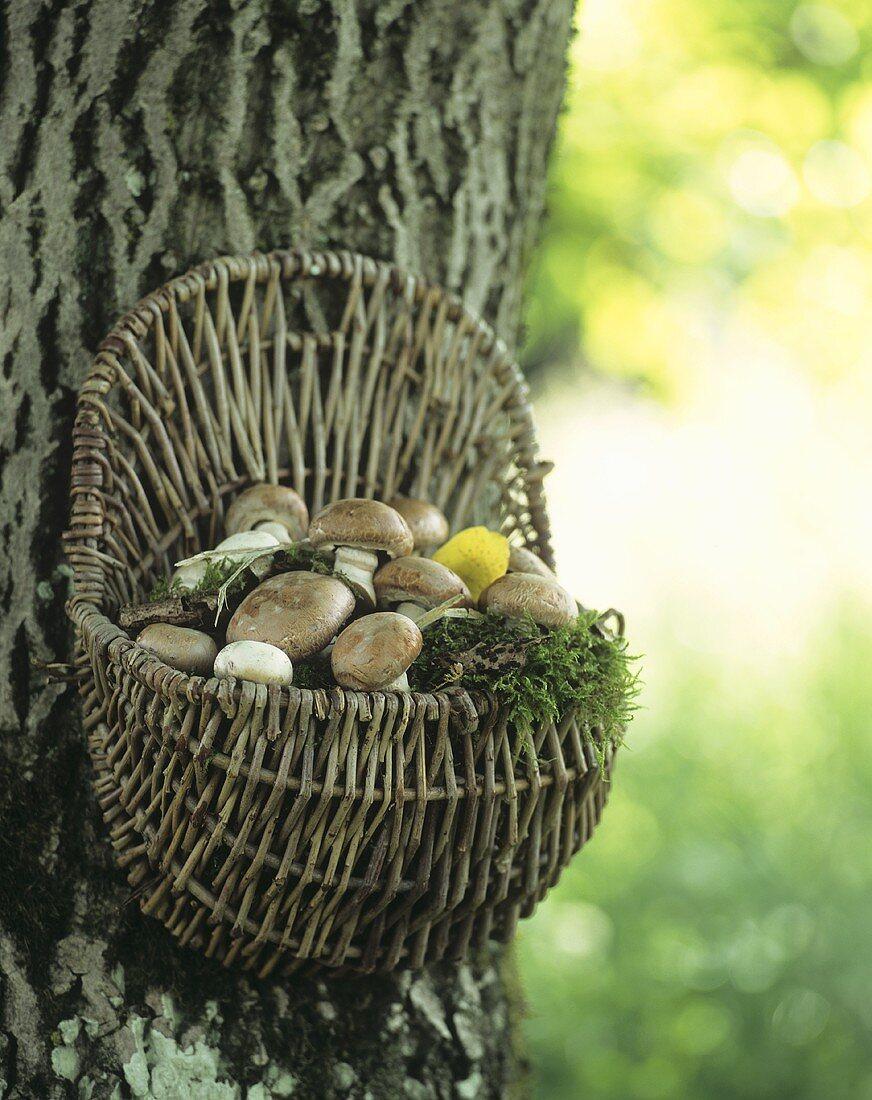 Basket full of mushrooms on a tree