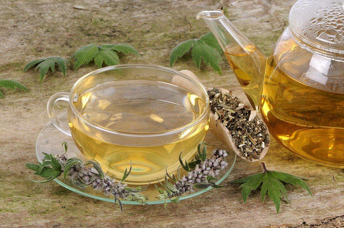 Motherwort (fresh, dried and tea)