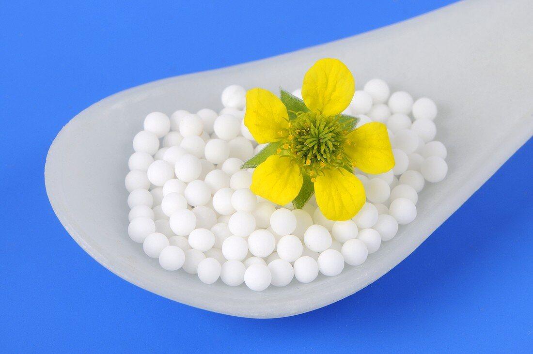Herb bennet (flower and globuli (pellets))
