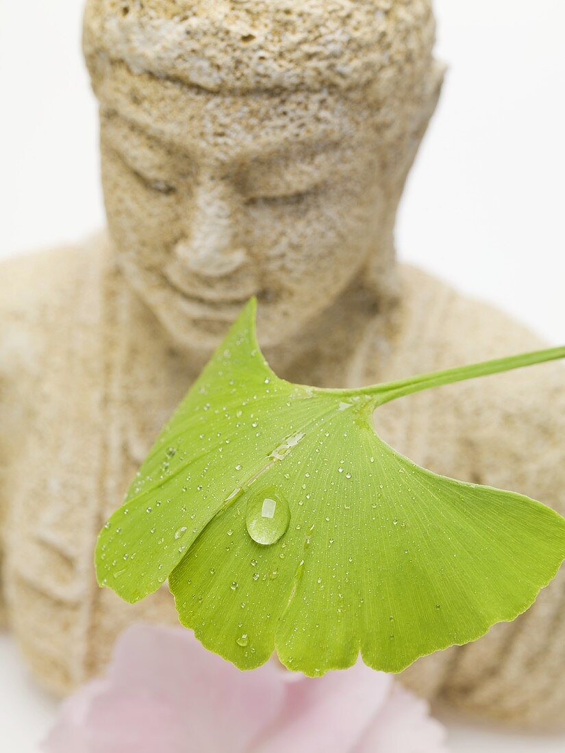 Gingko leaf with drops of water in front of Buddha figure