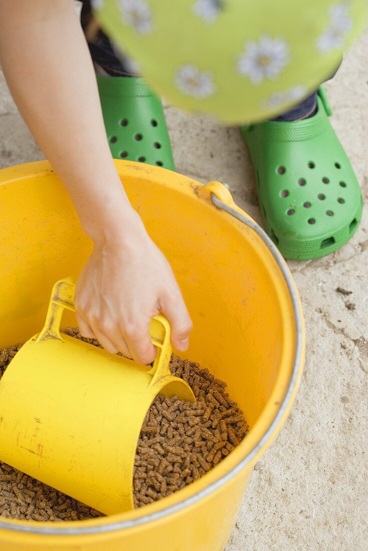 Woman scooping chicken feed out of a bucket