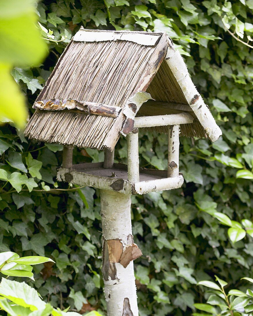 Bird house in front of ivy hedge in garden