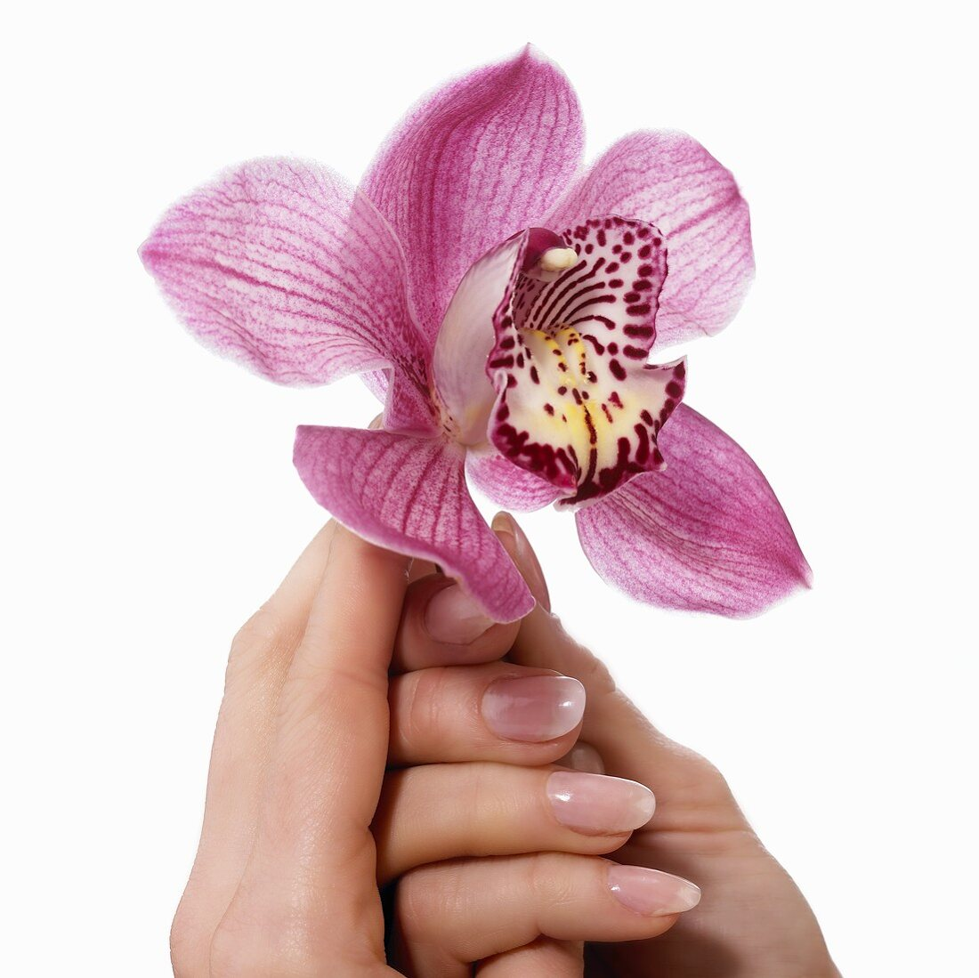 Hand holding orchid
