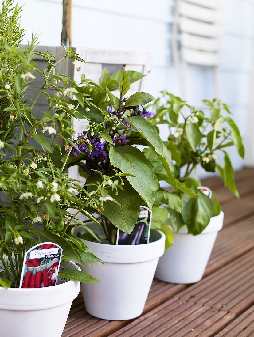 Various vegetable plants in ceramic pots by house wall