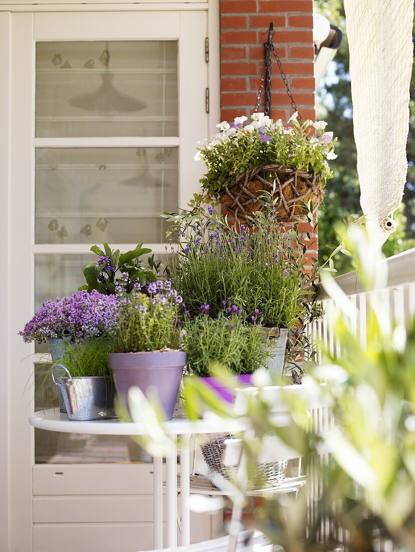Various culinary herbs in pots on a balcony