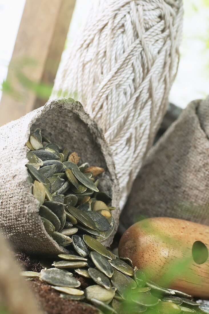 Pumpkin seeds for sowing
