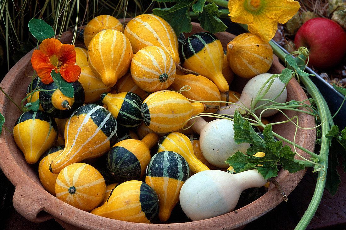 Bowl of ornamental gourds